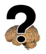 questionmark over brain